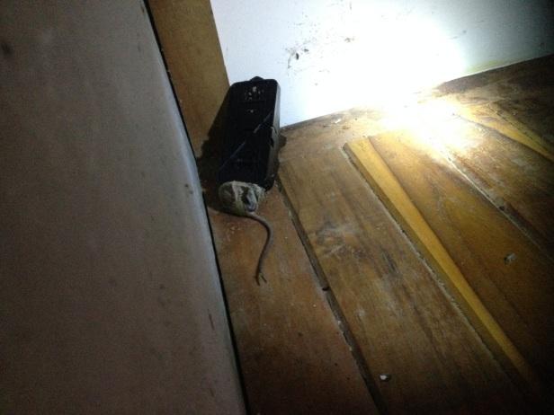 hiirenloukku