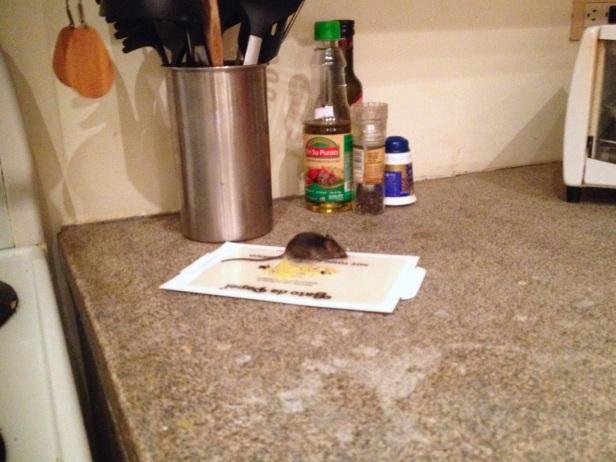 hiirenpyydys